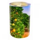 Price's Valencian Orange Scented Lantern Candle
